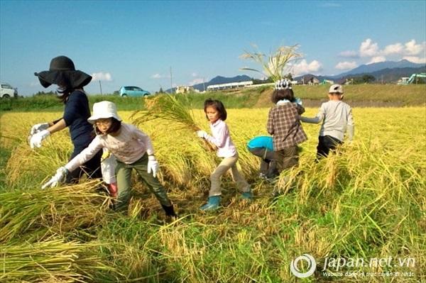 Lý do chọn Niigata để đi xuất khẩu lao động?