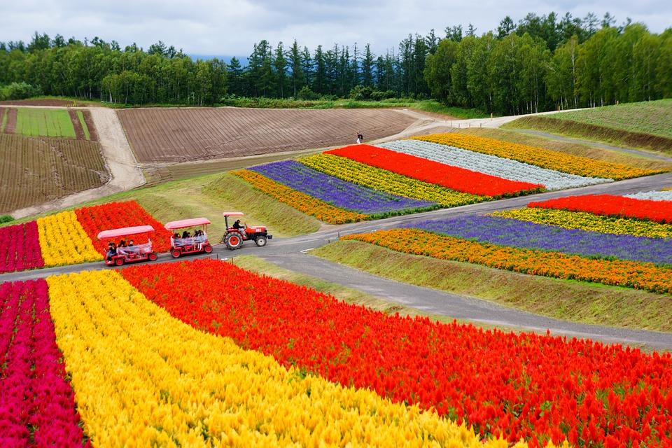 Hokkaido – Vùng đất thần kỳ của Nhật Bản