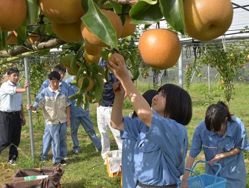 Đơn hàng nông nghiệp XKLĐ tại tỉnh Ibaraki, Nhật Bản