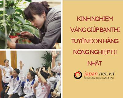 Kinh nghiệm vàng giúp bạn thi tuyển đơn hàng nông nghiệp đi Nhật dễ như ăn kẹo