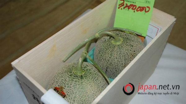 Sửng sốt với cặp dưa lưới Nhật Bản có giá hơn nửa tỷ đồng