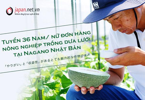 Cần Tuyển 36 Nam/ nữ đơn hàng nông nghiệp trồng dưa lưới tại Nagano Nhật Bản