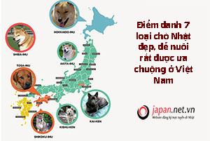 Điểm danh 7 loại chó Nhật đẹp, dễ nuôi rất được ưa chuộng ở Việt Nam