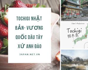 Tochigi Nhật Bản- vương quốc dâu tây xứ anh đào