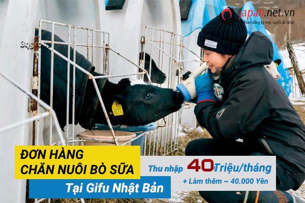 ĐƠN HOT- tuyển 24 Nam/nữ đơn hàng đi nhật lần 2 ngành chăn nuôi bò sữa