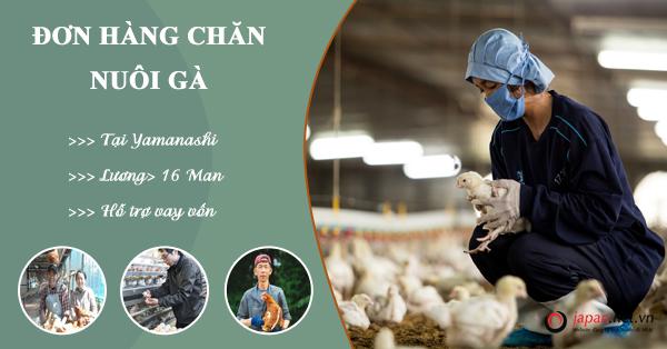 Cần tuyển 30 Nữ đơn hàng nuôi gà đi Nhật lương cao tại Yamanashi