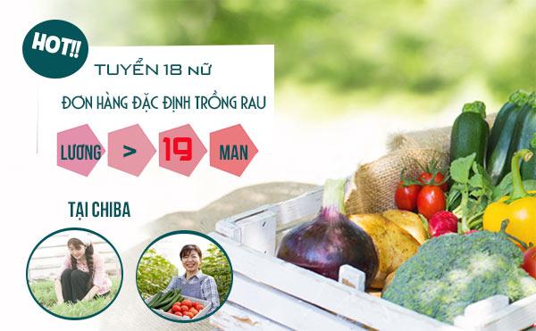 18 Suất đi Nhật đơn hàng đặc định nông nghiệp trồng rau tại Chiba >19 Man