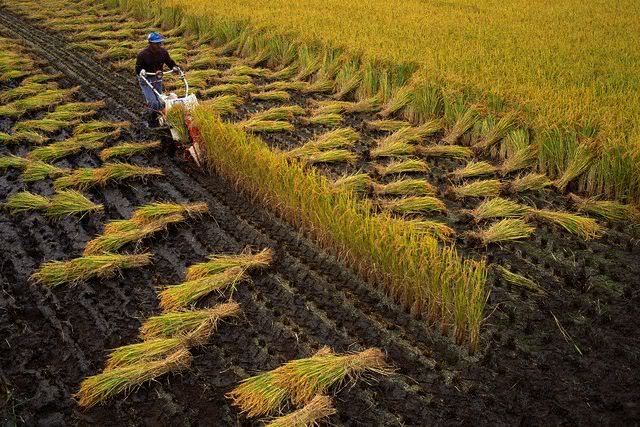 khám phá nền nông nghiệp Nhật Bản