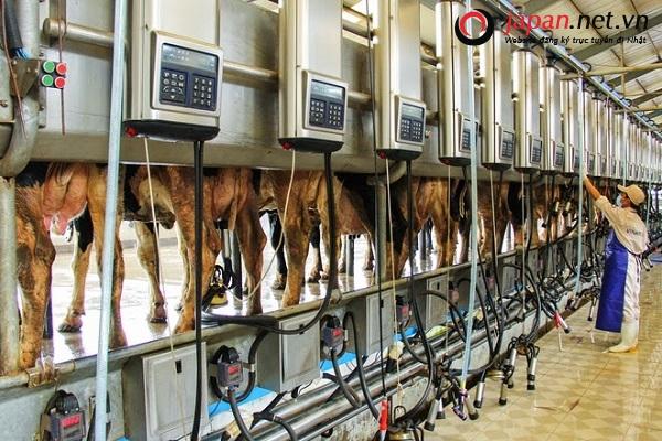 xuất khẩu lao động Nhật Bản tỉnh Lạng Sơn chi phí thấp
