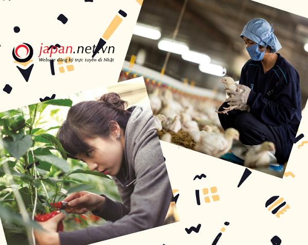 Độ tuổi dễ đi xuất khẩu lao động Nhật Bản là bao nhiêu?