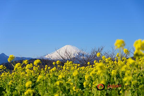Bạn đã biết về vị trí địa lý Nhật Bản- Những điều bạn chưa biết về xứ phù tang