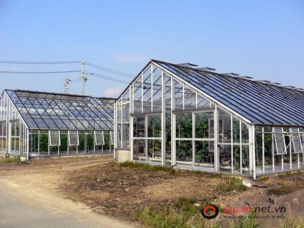 Công việc thực tế của đơn hàng nông nghiệp nhà kính tại Nhật Bản