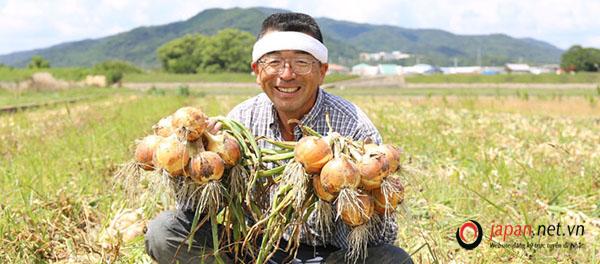 Cần gấp 36 nam đơn hàng trồng hành tại Fukushima Nhật Bản, nhiều làm thêm