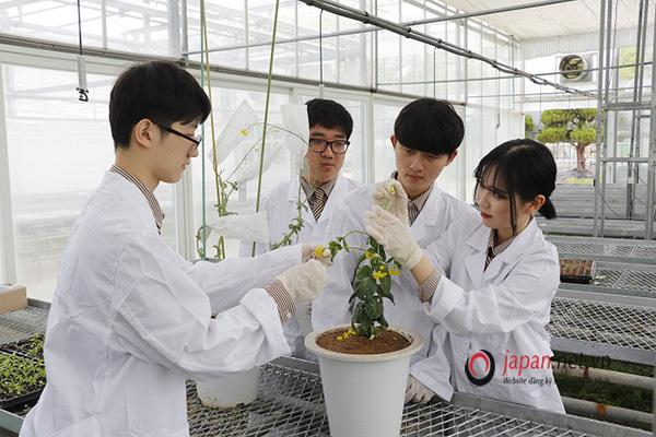 [ĐƠN HIẾM] Tuyển Kỹ sư nông nghiệp trồng và thu hoạch tía tô, không yêu cầu tiếng