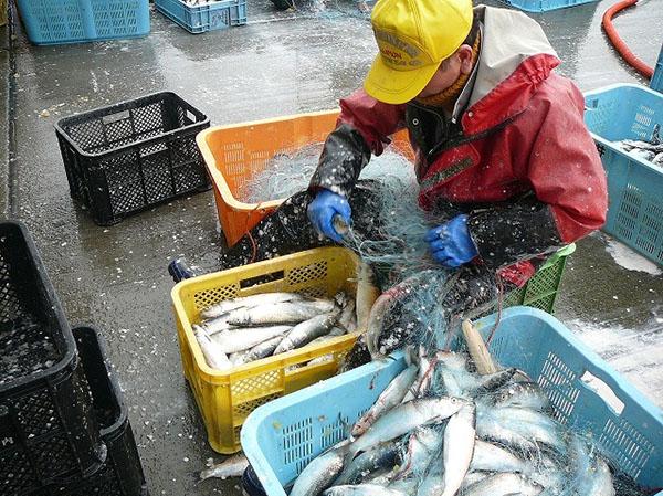 """""""Khan hiếm"""" Kỹ sư nuôi trồng thủy sản có tiếng Nhật"""