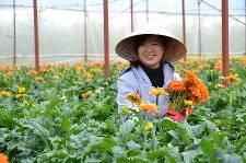 Siêu hot: Đơn hàng trồng hoa, cây cảnh trong nhà kính taị Aichi lương tháng 30 triệu